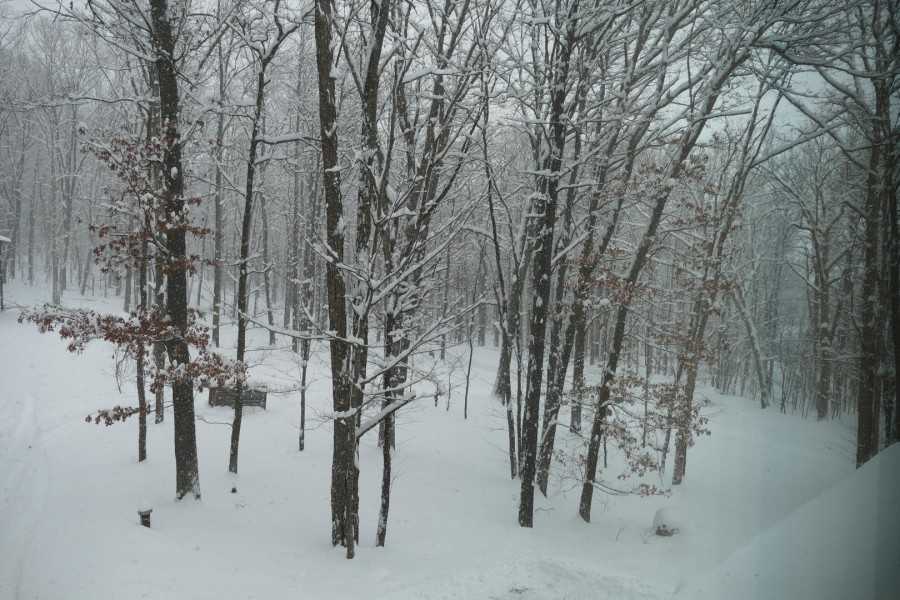 view out back - Winter