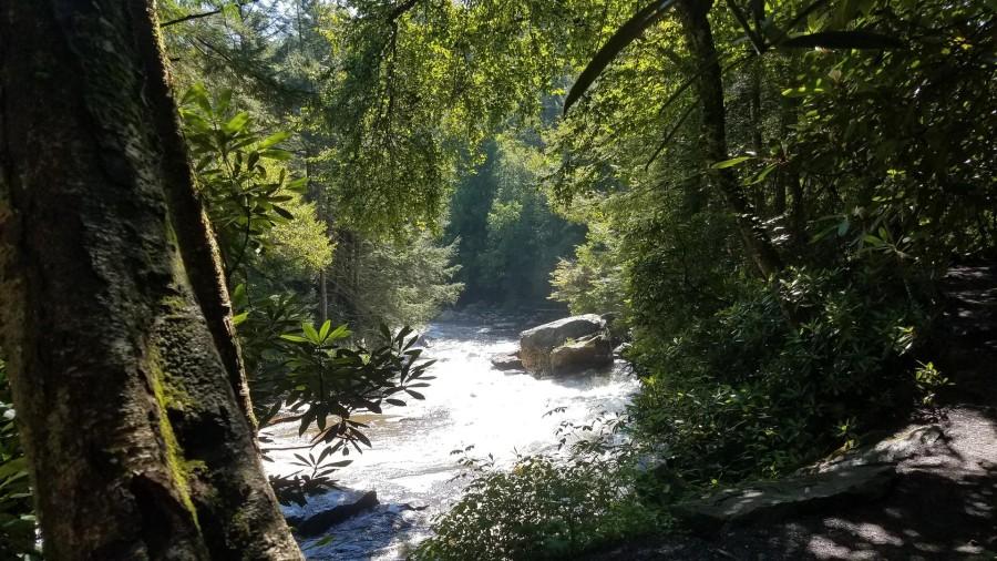 Swallow Falls Views